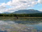 Katahdin with moose in forground